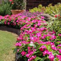 With quality landscape you can enhance the look of your space.